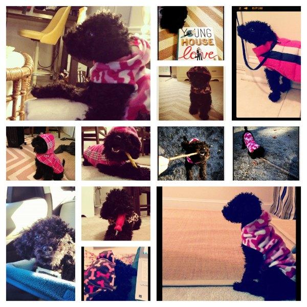 Penny in November