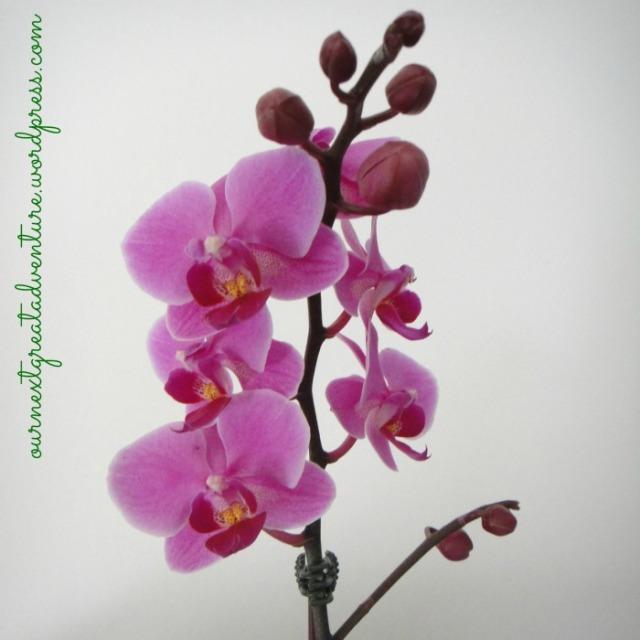 Desk - Orchids