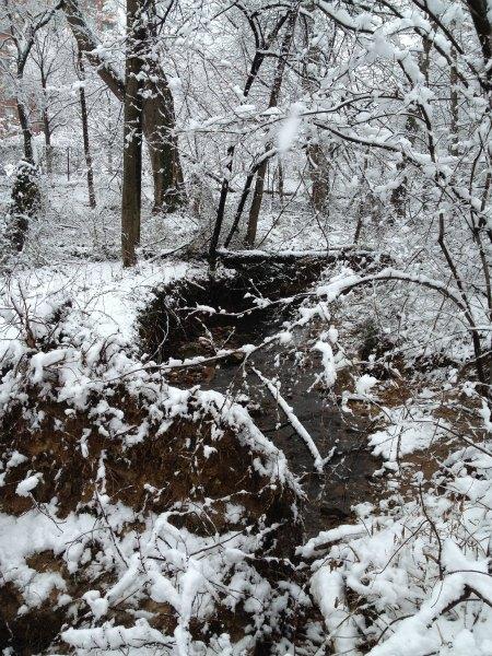 Snowy Spring Day in VA 2013.jpg