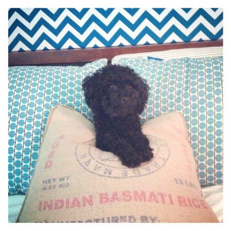 Penelope Sleeps In - Teddy Bear Imitation