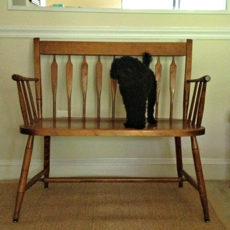 Craigslist Bench under inspection