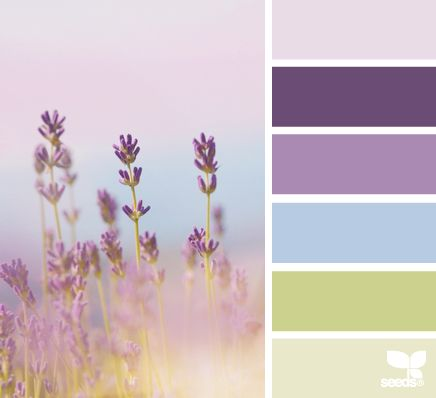 Lavender Hues - Inspiration