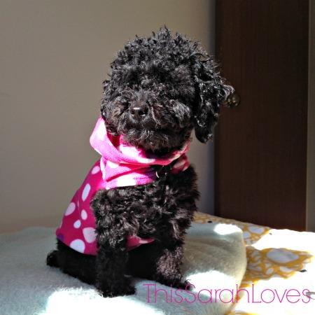 Sunning #penelopepoodle #thissarahloves