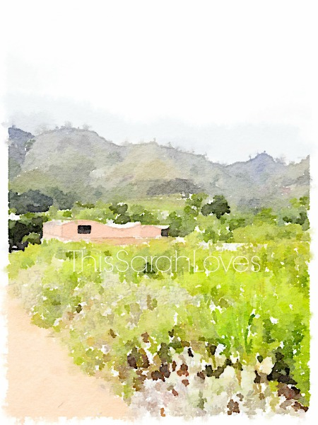 Water Color - Stellenbosch Wine Country