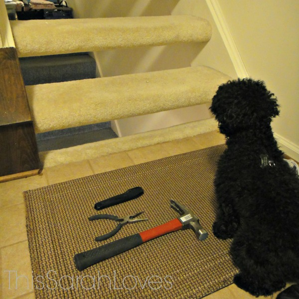 Penelope - Carpet Removal - Stairs #thissarahloves