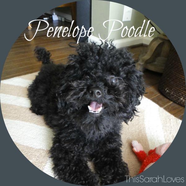 Penelope Poodle