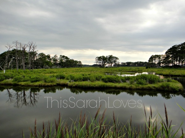 Chincoteague Views - Assateague