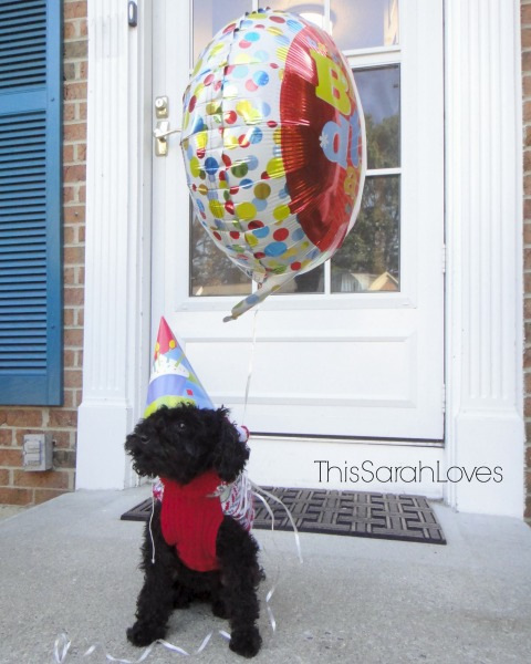 Penelope Poodle Turns 3 - Official Birthday Picture - #thissarahloves
